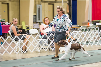 19ORY'S ABSOLUTE CATCH AT FYREBYRD , SS05321702 5/14/2018. Breeder: Joy Ory & Kellie L Miller. By CH Trumphant's Absolutely G.Q JH -- GCHG Ory's Catch Me If You Can. Kellie Miller and Sara Taylor . Dog.