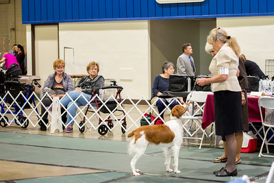 WHISPER RIDGE HUNTIN' FOR FEATHERS , SS05761807 6/1/2018. Breeder: Pam Askew and Sue Richards. By GCHS Sunquest Star Vue's Special Edition -- CH Whisper Ridge Wrightwood's Sage. John Lueken and Sue Richards . Dog.
