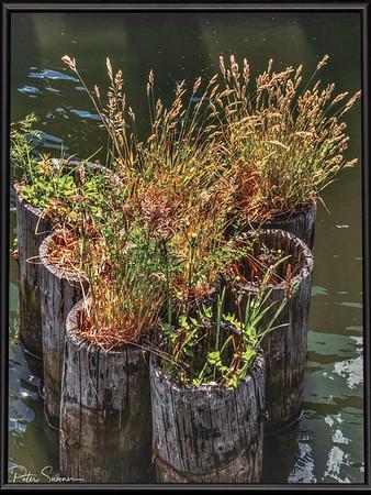 Pier Plantings