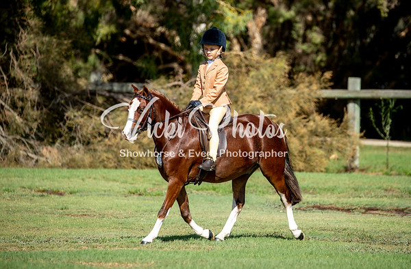 Open Show Horse and Dressage Day - 10th March 2019