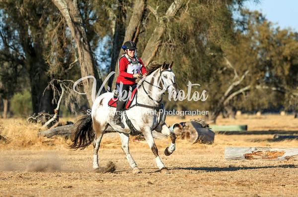Pegasus Feeds Oakford Jump Cross - 20th January 2019