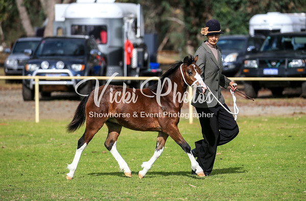 Progeny on Parade Foal Show - 4th May 2019