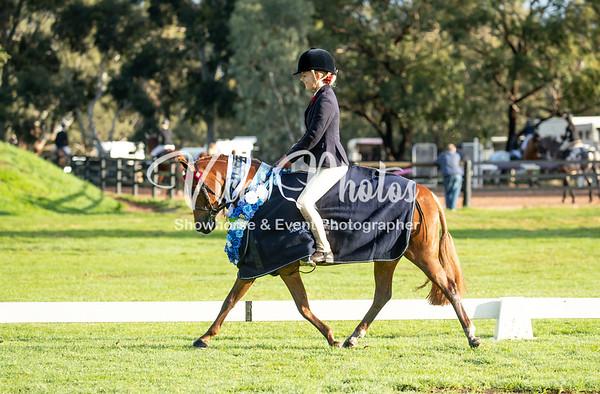 SHCWA Western Stars & Saddles Plus Debutante
