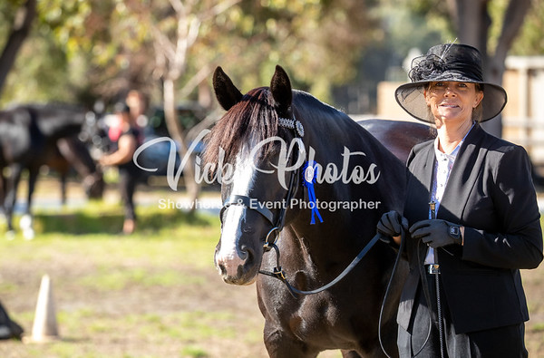Healthway Heavy Horse Festival - 6th & 7th April 2019
