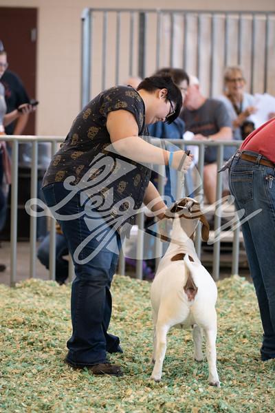 Boer Goats