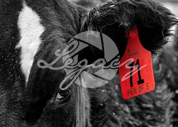 Nebraska Cattleman's Classic