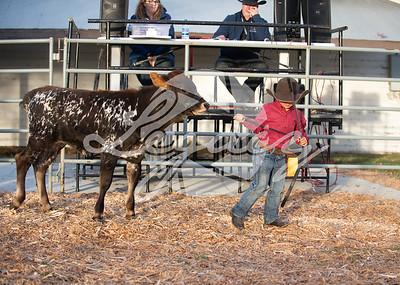 Open Cattle