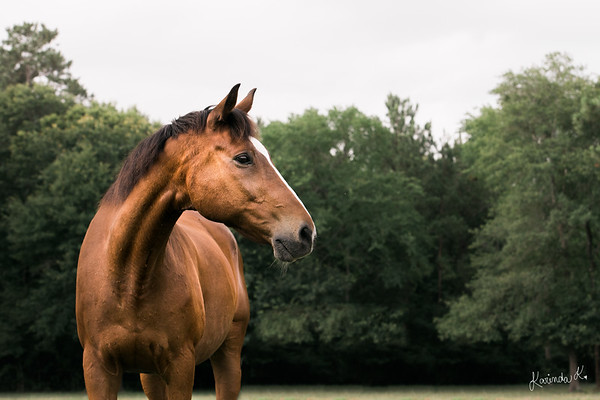 Images of the Horses at SIRE Therapeutic Horsemanship in Houston,TX by Equine Photographer Karinda K.
