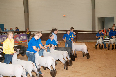 tulsa_20190930_sheep_showmanship-19