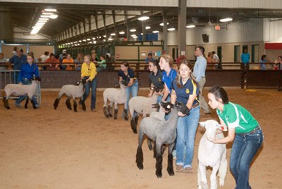 tulsa_20190930_sheep_showmanship-16