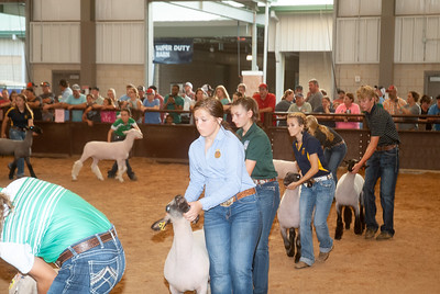 tulsa_20190930_sheep_showmanship-20