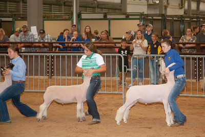 tulsa_20190930_sheep_showmanship-24