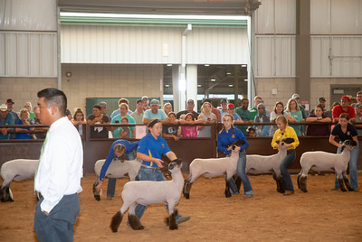 tulsa_20190930_sheep_showmanship-22