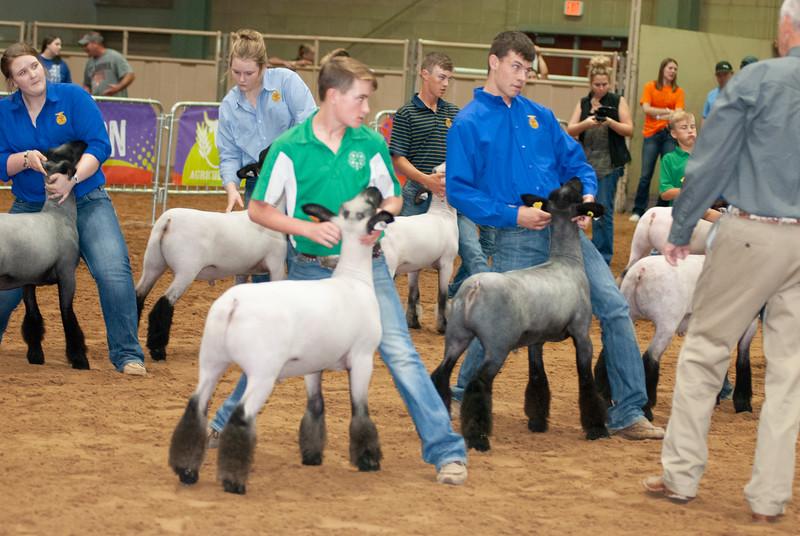 Tulsa_2019_grand-drive-sheep-5