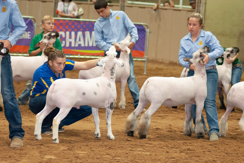Tulsa_2019_grand-drive-sheep-7