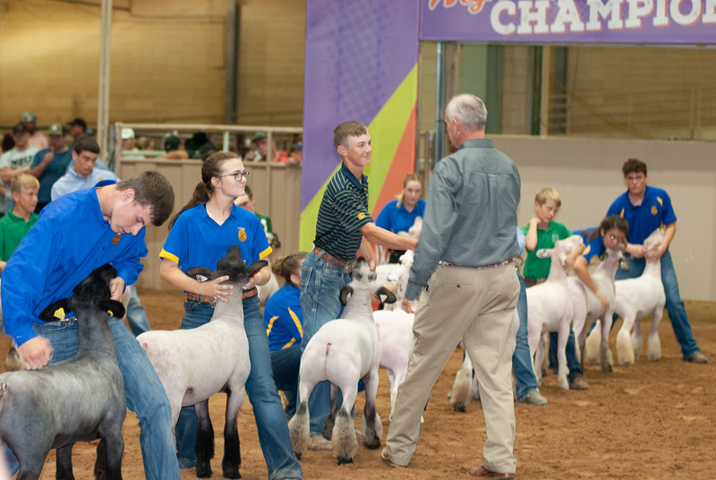 Tulsa_2019_grand-drive-sheep-12