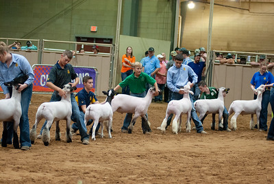 Tulsa_2019_grand-drive-sheep-1