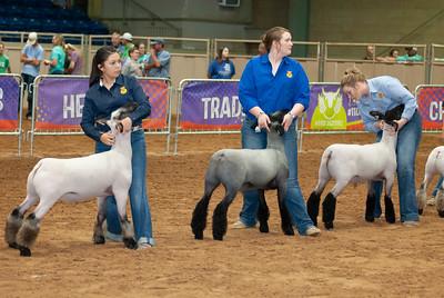 Tulsa_2019_grand-drive-sheep-3
