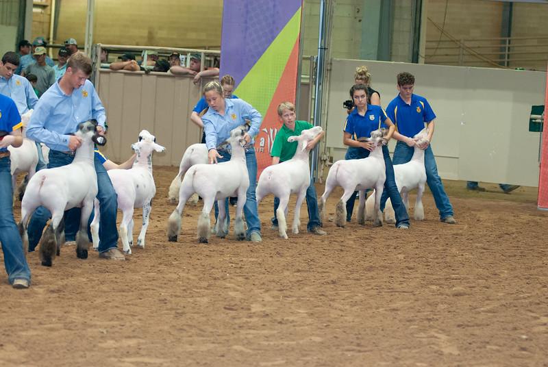 Tulsa_2019_grand-drive-sheep-4