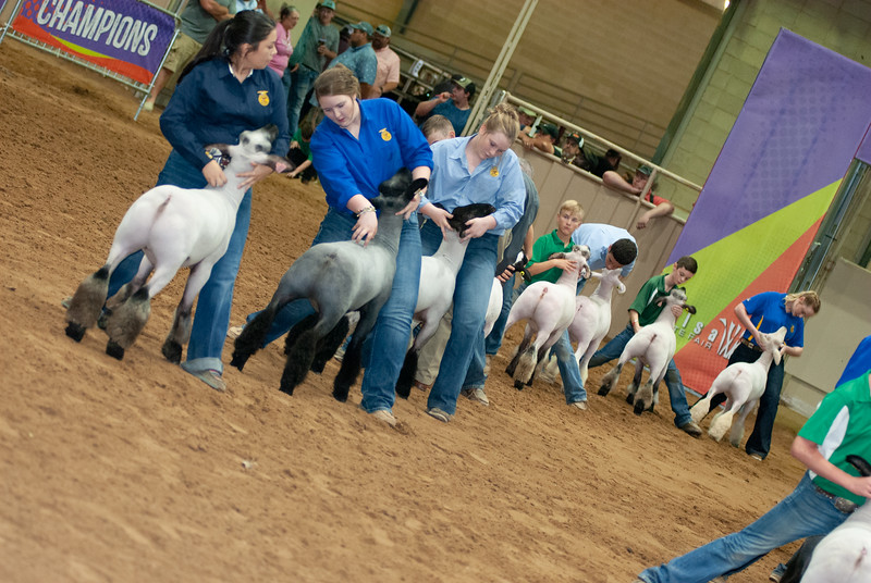 Tulsa_2019_grand-drive-sheep-10