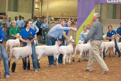 Tulsa_2019_grand-drive-sheep-11