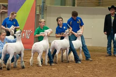 Tulsa_2019_grand-drive-sheep-8