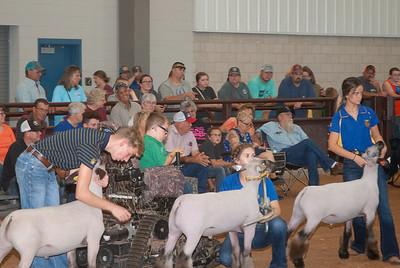 Tulsa_2019_sheep_day1-16