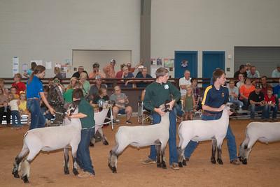 Tulsa_2019_sheep_day1-12