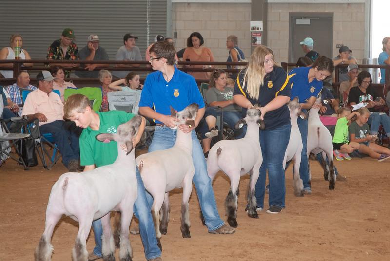 Tulsa_2019_sheep_day1-10