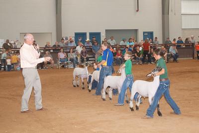 Tulsa_2019_sheep_day1-22