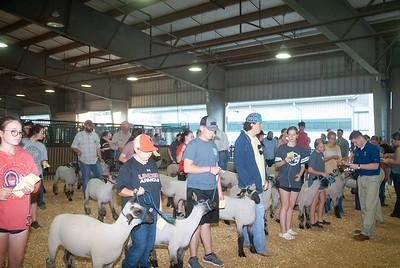 Tulsa_2019_sheep_day1-3