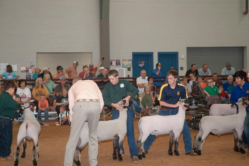 Tulsa_2019_sheep_day1-13