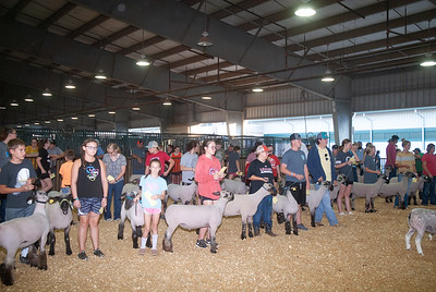 Tulsa_2019_sheep_day1-1