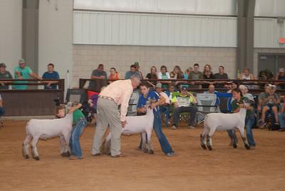 Tulsa_2019_sheep_day1-21