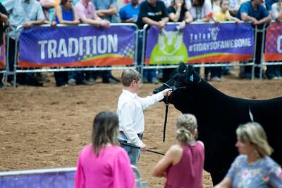 Tulsa_20191002_grand-drive-steers-17
