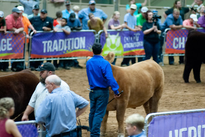 Tulsa_20191002_grand-drive-steers-19