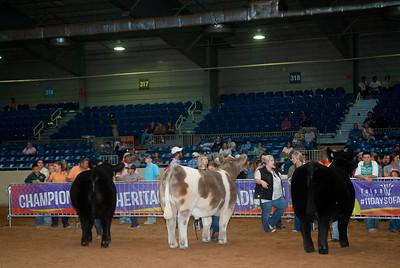 Tulsa_20191002_grand-drive-steers-1