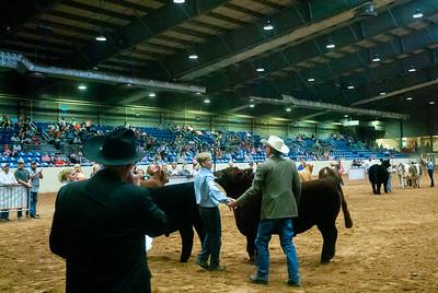Tulsa_20191002_grand-drive-steers-16