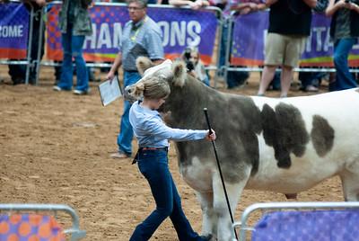 Tulsa_20191002_grand-drive-steers-15