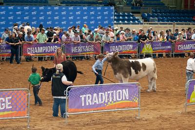 Tulsa_20191002_grand-drive-steers-10