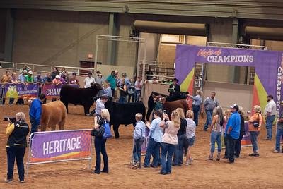 Tulsa_20191002_grand-drive-steers-12