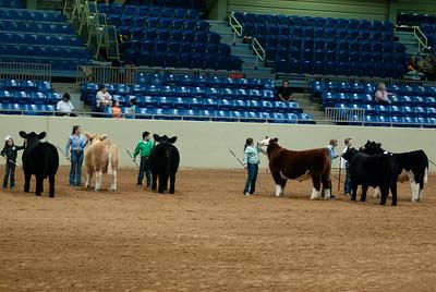 Tulsa_20191002_grand-drive-steers-7