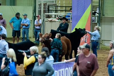 Tulsa_20191002_grand-drive-steers-22