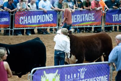 Tulsa_20191002_grand-drive-steers-18
