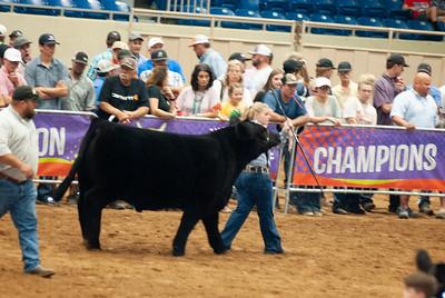 Tulsa_20191002_grand-drive-steers-8