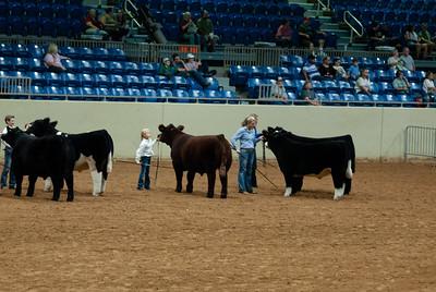 Tulsa_20191002_grand-drive-steers-6