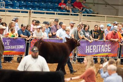 Tulsa_20191002_grand-drive-steers-9