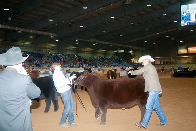 Tulsa_20191002_grand-drive-steers-14