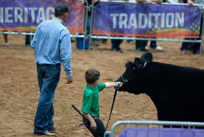 Tulsa_20191002_grand-drive-steers-13