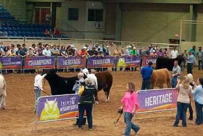 Tulsa_20191002_grand-drive-steers-11